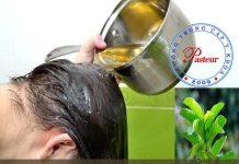 Lá ổi chữa bệnh rụng tóc