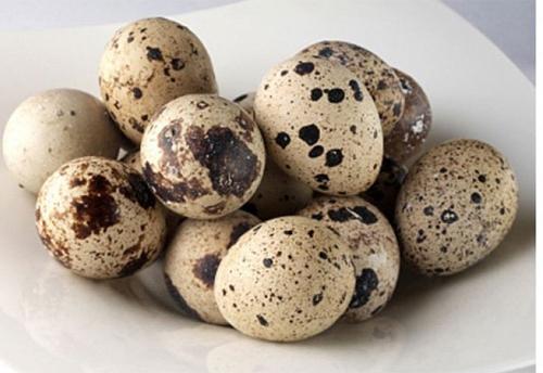 trứng chim cút
