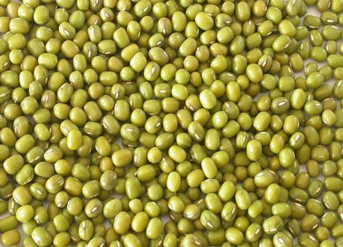 Nguồn gốc và đặc điểm của cây đậu xanh