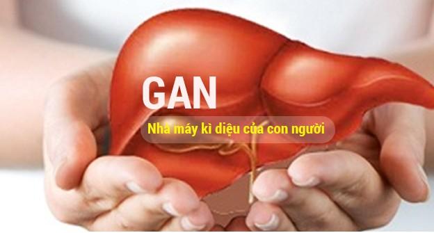 Gan là một cơ quan rất quan trọng của cơ thể