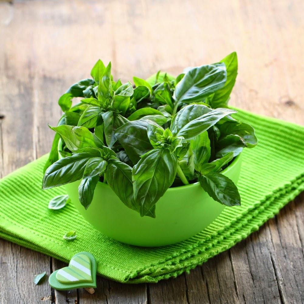 Rau húng quế là một loại rau khá là gần gũi đối với con người Việt Nam