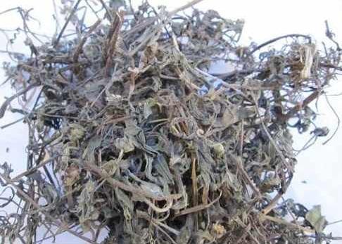 Chứng viêm họng được cải thiện hiệu quả nhờ cây cỏ mực