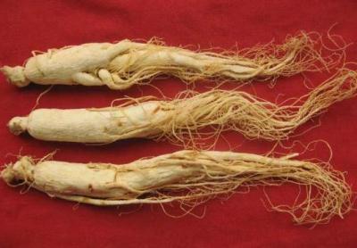 Hồng sâm hỗ trợ tốt cho việc cải thiện các bệnh loãng xương ở người già