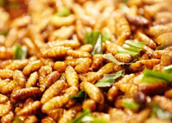 Nhộng tằm là món ăn ngon - bài thuốc hỗ trợ điều trị nhiều bệnh